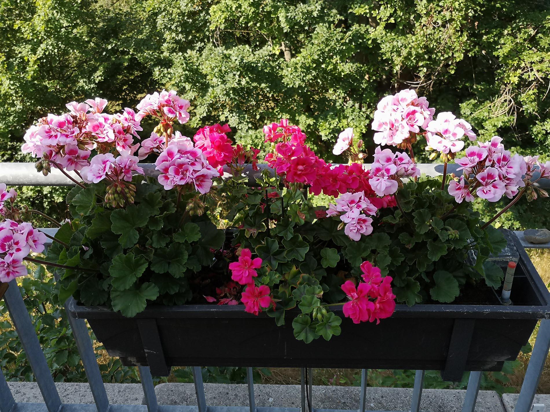 Hospiz kaufte von Spende Bewässerungsanlage für Blumen