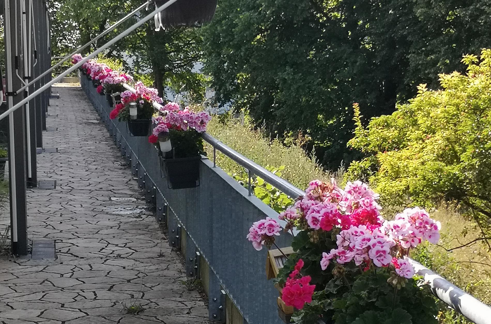 Blumenpracht am Hospiz in Salzgitter