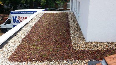 Energieffizientes Flachdach mit Dachbegrünung